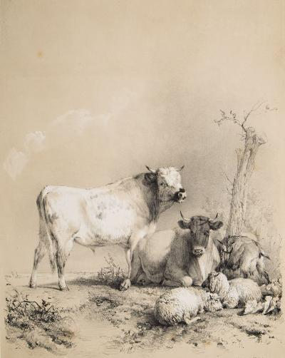 Sale BK19; Lot: 0445: COOPER, TS - Thirty Four Subjects of Cattle &c Frontis, title-page, 32 tinted lithograph plates, cont half morocco rubbed, folio, foxing throughout, Tho. McLean, 1837.