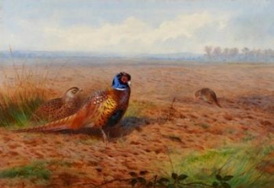 Sale FS11; Lot: 0405: Archibald Thorburn (1860-1935) - Cock and Hen Pheasant, signed and dated 1901.