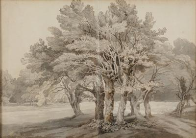 John White Abbott [1763-1851] - A study of a group of trees in parkland - pen and grey ink and grey wash on two sheets of paper laid down 25.5 x 35.75cm.